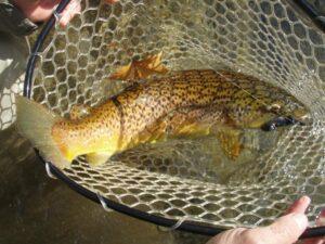 Delayed Harvest trout fishing on the Nantahala